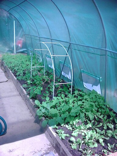 Growing inside a greenhouse