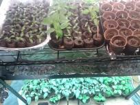 ghg seeds