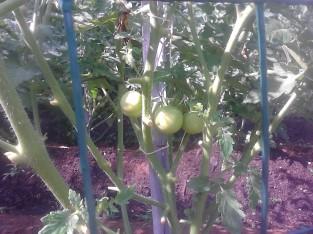 First fruit!