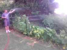 Daily watering session