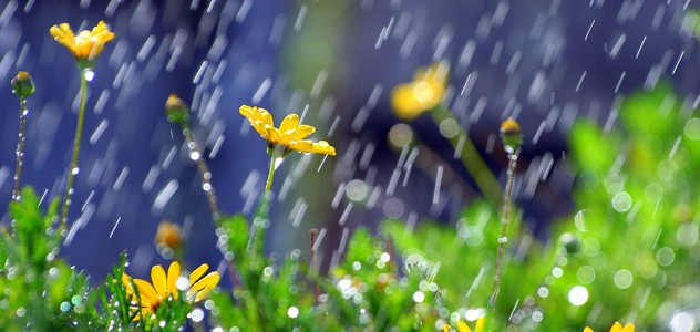 april-showers-may-flowers-e1335751575117