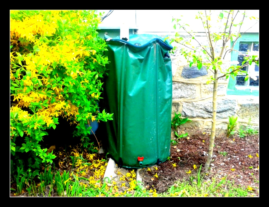 Rain barrel front view
