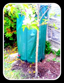 rain barrel side view