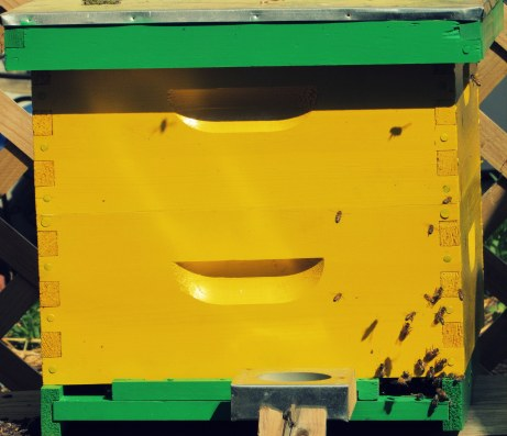 bee box 5.3