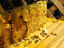 honey comb 1
