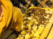 honey comb 2