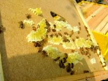 honey comb 4