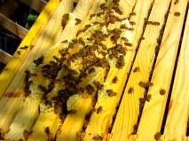 honey comb 5