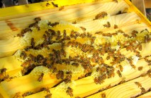 honey comb 6