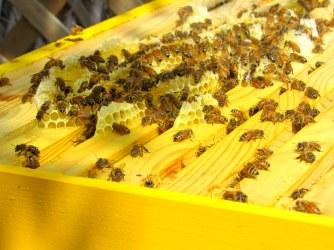 honey comb 7