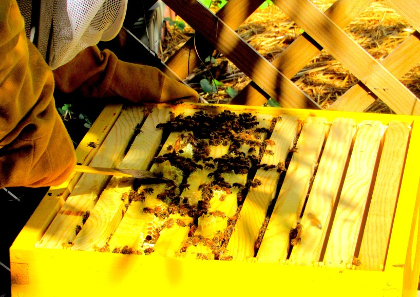 scrapping off brood 4