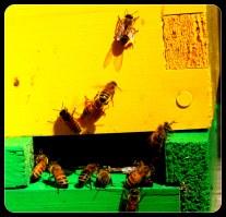 the hive doorway
