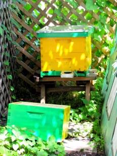 BeeBox 3