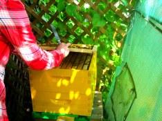 BeeBox 4