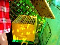 BeeBox 5