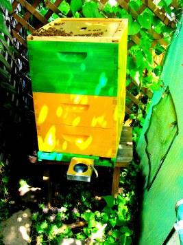 BeeBox 6