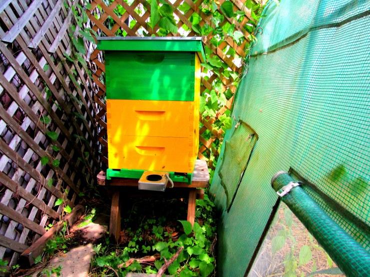 BeeBox 8