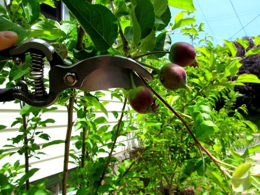 Fruit Tree 1