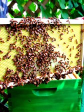 bees 7.5 2