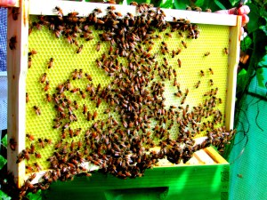 bees 7.5 3