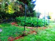 Deer Fence 1 - Copy (2)