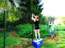 deer fence 12 - Copy