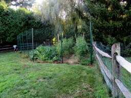Deer Fence 4 - Copy (2)