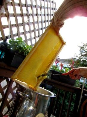 Honey harvest 1
