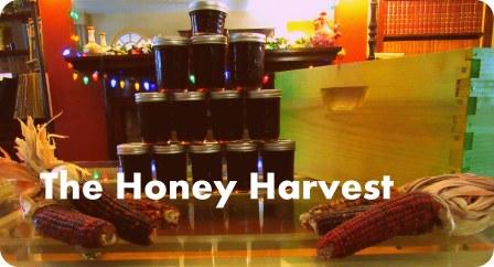 honey harvest 5