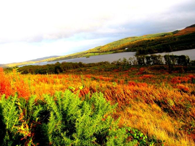 Lake Co. Donegal. Near St. Columba Well