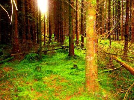Moss field. Co. Donegal